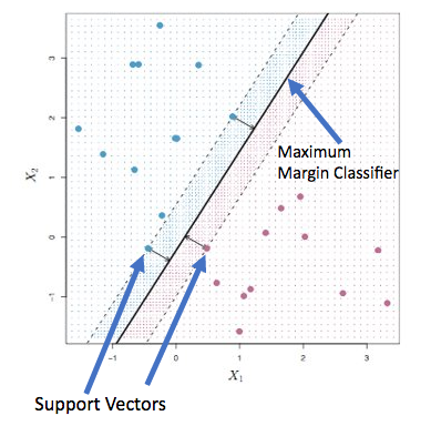 Maximum Margin Classifier is the thick black line and the points on the dotted line are support vectors