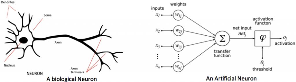 Biological Neuron Vs Artificial Neuron